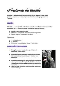 Anatomia da Tireoide