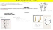 Equilíbrio, força, tônus muscular e marchas