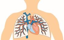 Sistema cardíaco