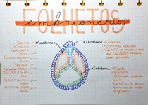 Histologia- Embriologia