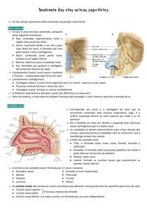 Anatomia das vias aéreas superiores