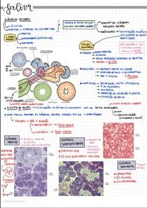 Saliva e glândulas