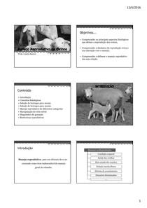 Aula 04 - Manejo Reprodutivo de Ovinos
