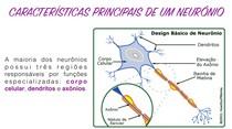 PRINCIPAIS CARACTERISTICAS DE UM NEURÔNIO