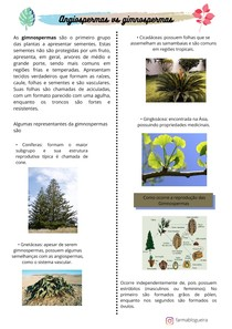 ANGIOSPERMAS E GIMNOSPERMAS (1)