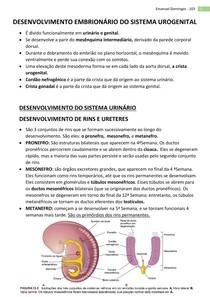 Embriologia - Sistema Urinário