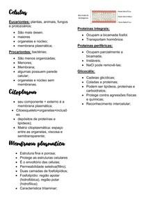Celulas, núcleo e citoesqueleto