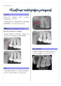 anatomia radiográfica periapical