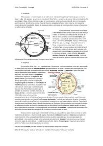 Visão (transdução) - Fisiologia