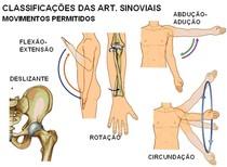 movimentos articulações sinoviais