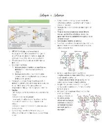 Antígeno e Anticorpo