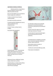 ANATOMIA DA MEDULA ESPINHAL
