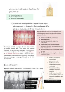 Anatomia do periodonto