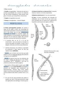 aula 6 - strongyloides stercoralis att