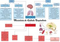 Mecanismo de controle respiratório