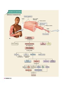 complemento_fisiologia_muscular