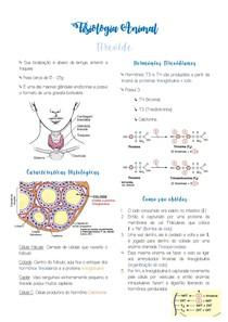 Resumo Tireoide - Fisiologia Animal
