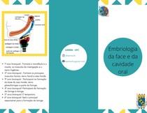 Embriologia da face