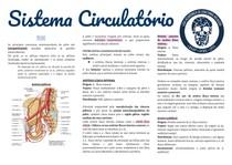 Anatomia sistema circulatório pt 5: pelve