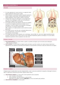 resumo fígado