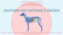 Slides Anatomia da Visão, Audição, Sistema Reprodutor Maculino e Feminino