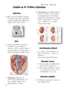 Anatomia do sist. urinário