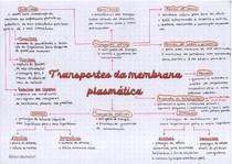 Mapa mental transportes da membrana plasmática