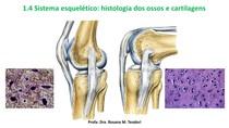 Sistema+esquelético+histologia+dos+ossos cartilagen