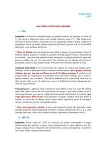 URO | NEFRO - Anatomia e fisiologia urinária