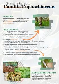 Família Euphorbiaceae   Botânica - Angiospermas