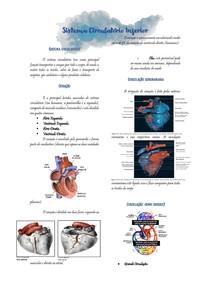 Sistema Circulatório Inferior
