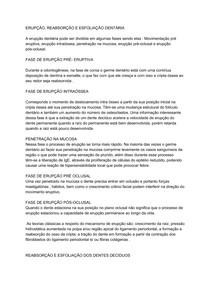 ERUPÇÃO DENTÁRIA- FASES