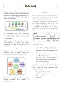 Auxinas e Citocininas