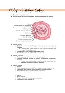 CITOLOGIA E HISTOLOGIA - ESÔFAGO II