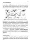 Noções de Taxonomia e Classificação - Parte III