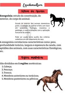 Exterior dos cavalos