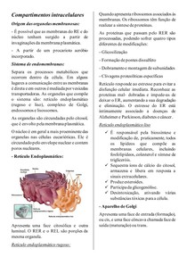 Compartimentos intracelulares