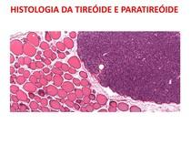 histologia da tireoide e paratireoide