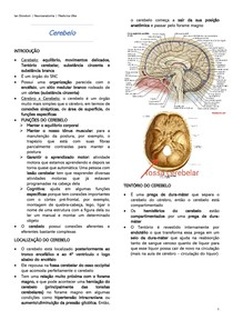 Cerebelo - Neuroanatomia