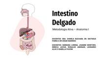 Intestino Delgado - Metodologia Ativa Anatomia I