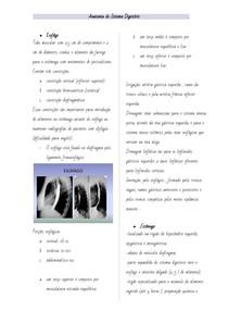 Anatomia do Sistema Digestorio