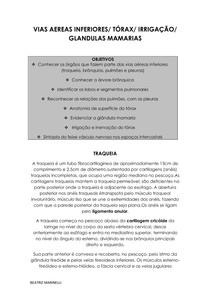 VIAS AÉREAS INFERIORES / TÓRAX / IRRIGAÇÃO / GLÂNDULAS MAMARIAS