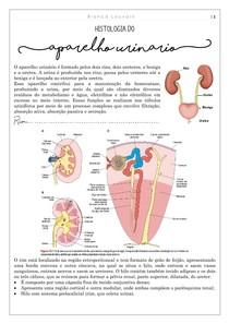 Histologia do sistema urinário