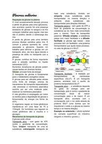 pâncreas endócrino fisiologia