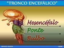 Tronco encefálico (slides)