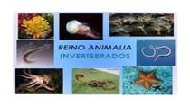 Biologia-Slides-Animais Invertebrados-