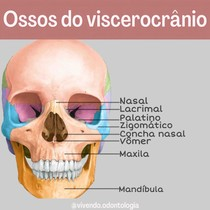 ossos do viscerocrânio