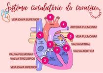 Sistema circulatório do coração - Anatomia Veterinária