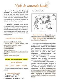 Ciclo do carrapato bovino