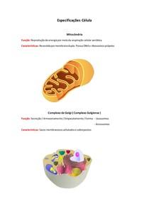 Especificações Célula